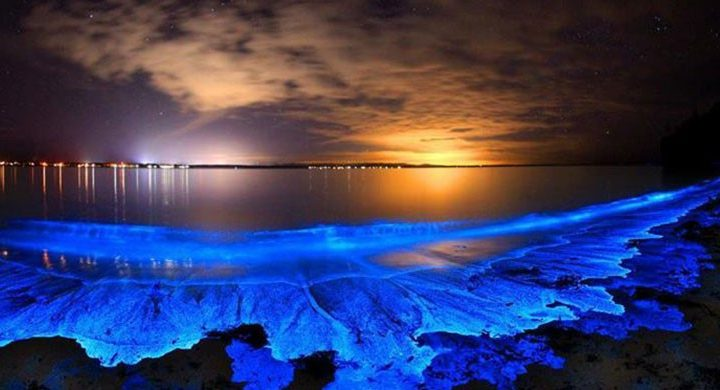 playa bioluminiscencia